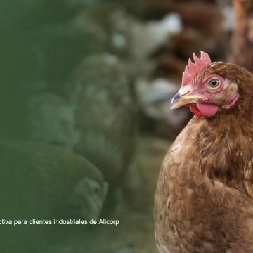 Exploración de nuevos mercados para productores de gallinas ponedoras