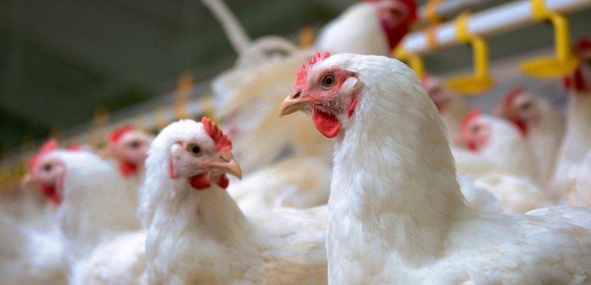 Importancia de las micotoxinas en la inocuidad alimentaria (Parte II)