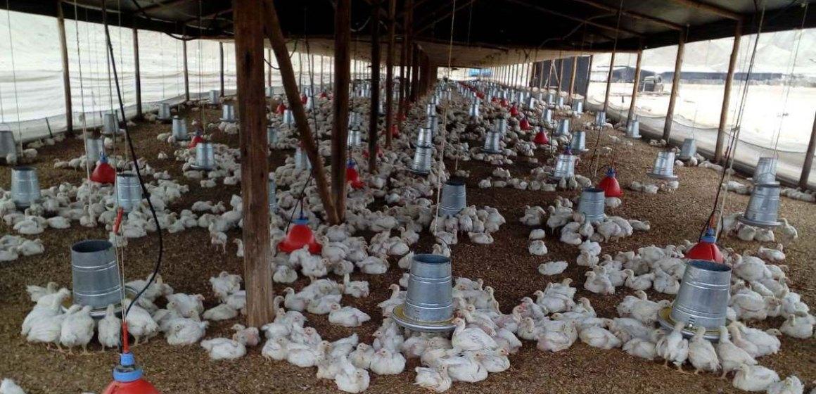 Producción pecuaria impulsa el crecimiento del sector agropecuario peruano