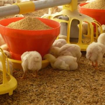 Uso y optimización de la vitamina E y alternativas de antioxidantes funcionales en alimentación animal