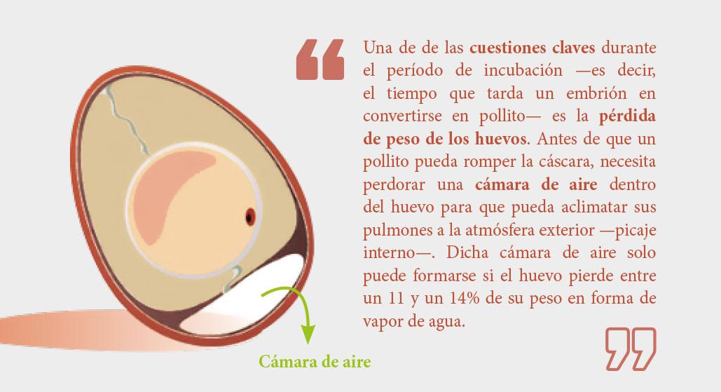Revista_Aves_75-24