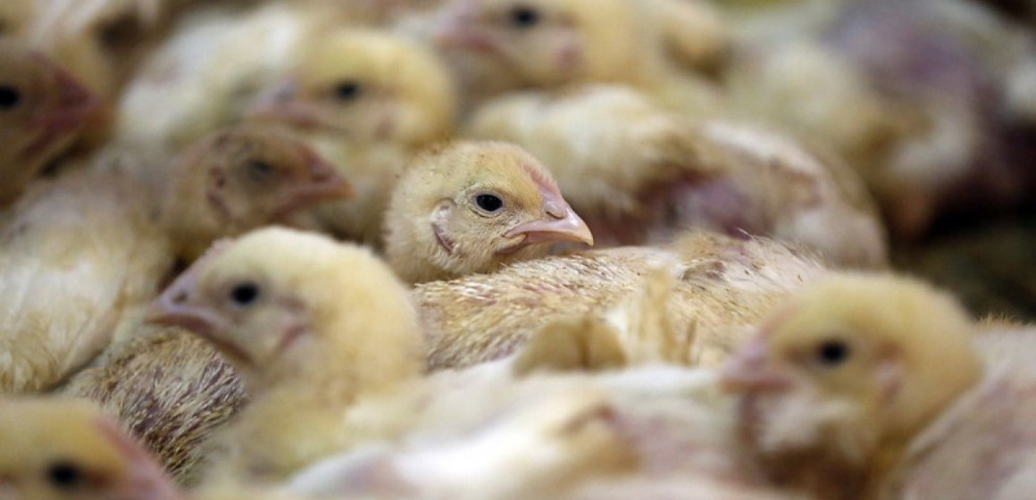 Estados Unidos: FDA publicaría una nueva guía para el uso de antibióticos