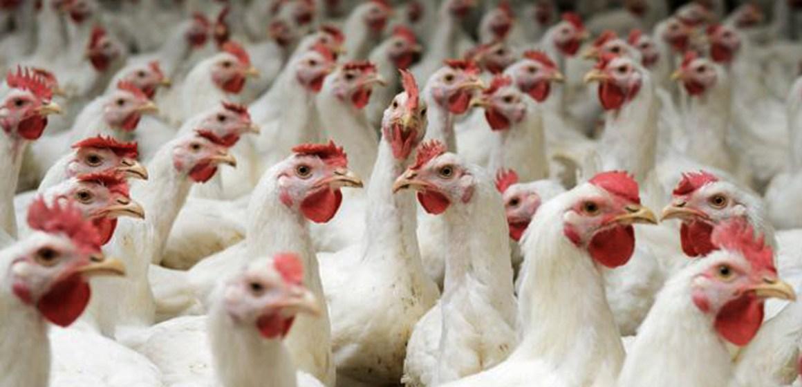 Uruguay negocia mercado aviar con China