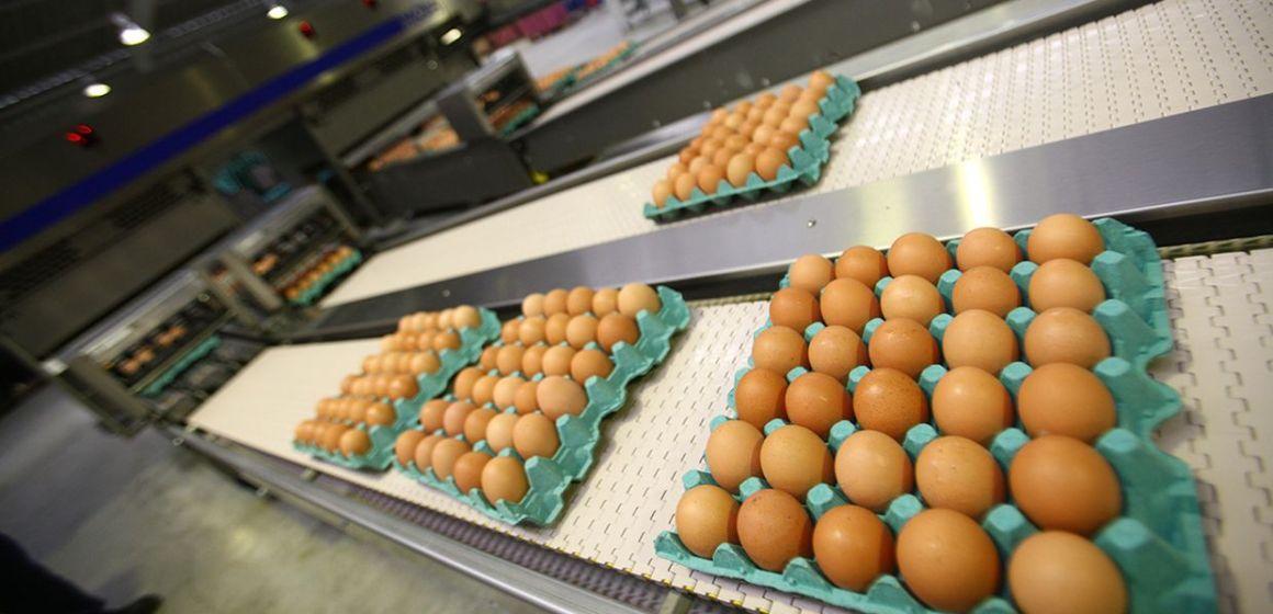 ¿Que hay de nuevo en la industria del huevo?