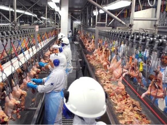 Producción avícola de Honduras crecerá a fin de año