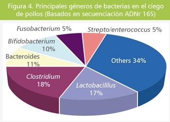 dieta-microbiana-05