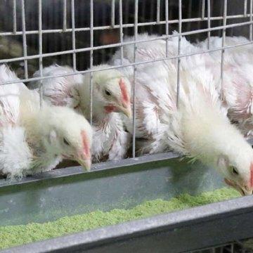 Conferencia y curso de dietas balanceadas para aves se realizará en Lima