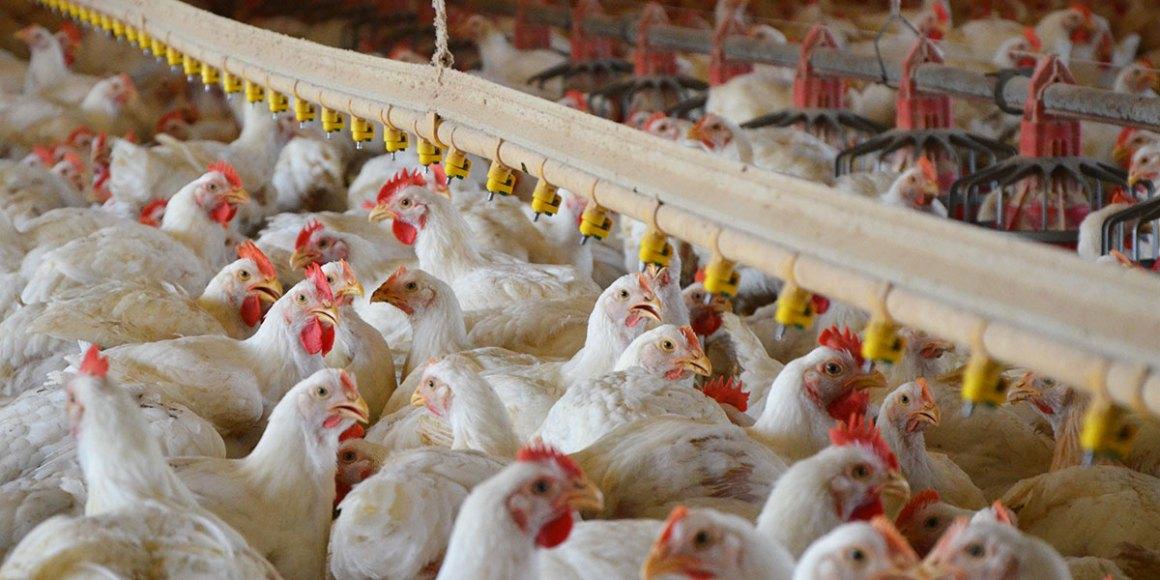 Periodista es condenada a prisión por injurias a granja avícola