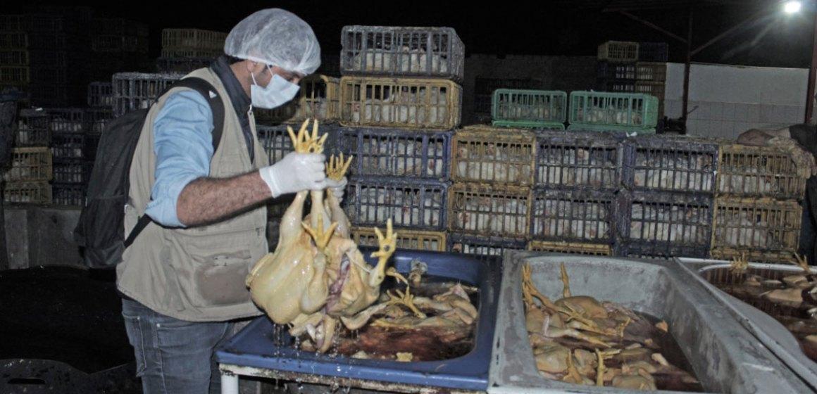 Trujillo: retienen 703 pollos en peladeros clandestinos