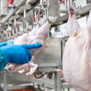 Consumo de pollo creció 9% en 2019 en Argentina