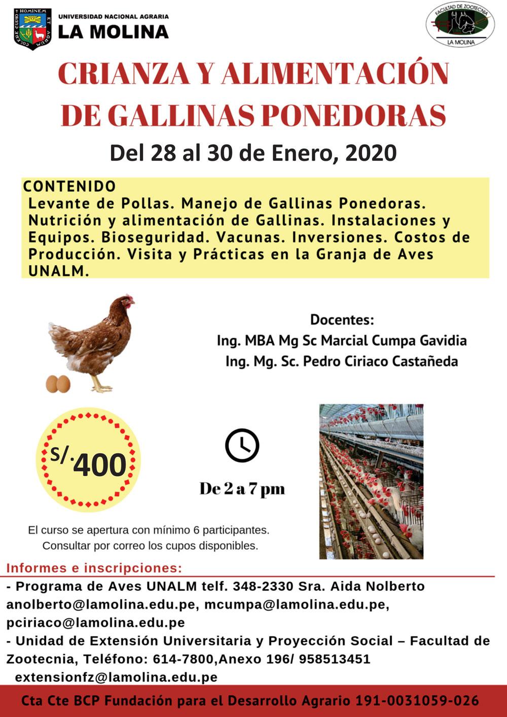 Gallinas---28-Enero-2020