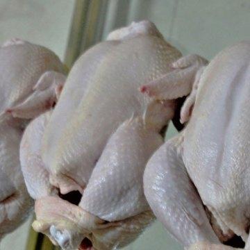 México aseguró que no se usan hormonas en pollos