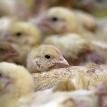 Determinación de perfiles de incubación