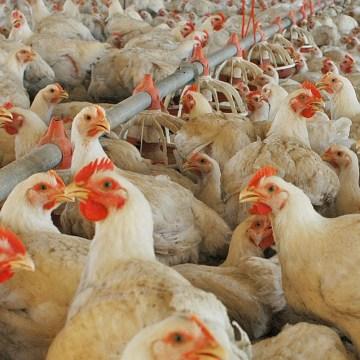 México: autoridades indican que precio del huevo y pollo no debe incrementar