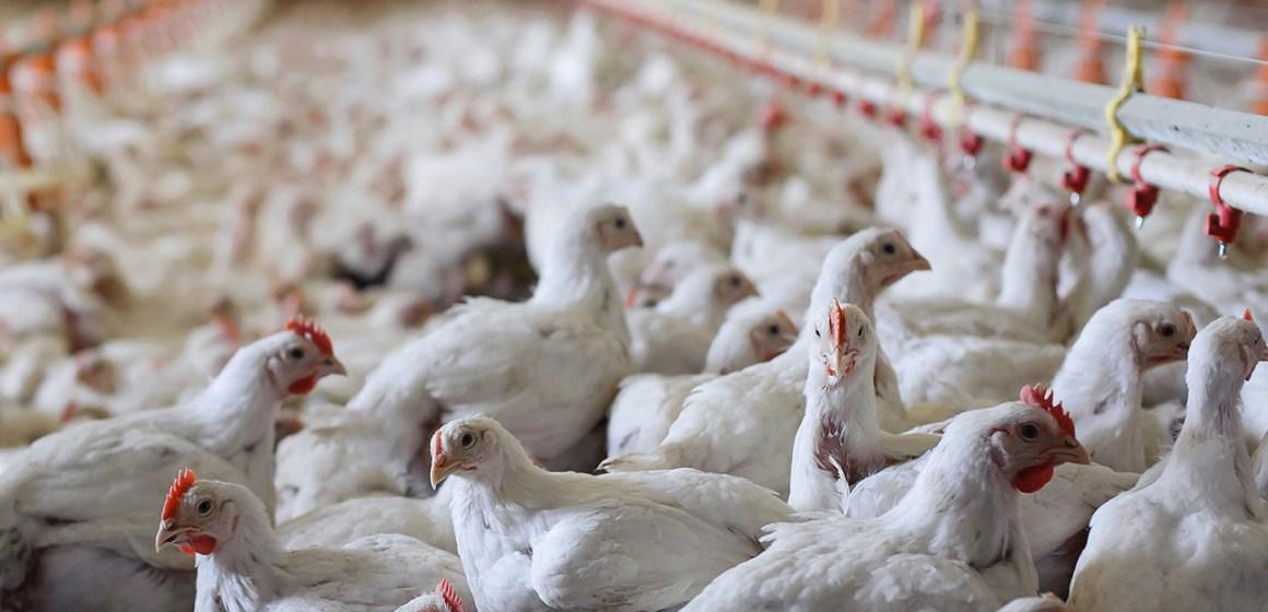 Región San Martín garantiza abastecimiento de pollo en mercados