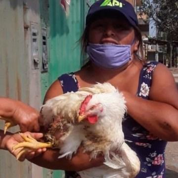 Se donaron más de 2 mil pollos en Trujillo