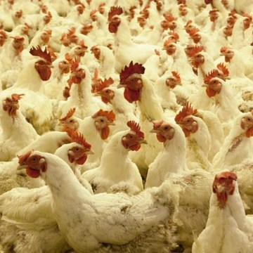 Sanagro desarrolló charla virtual sobre los beneficios y aplicaciones de Viusid Vet en la Avicultura