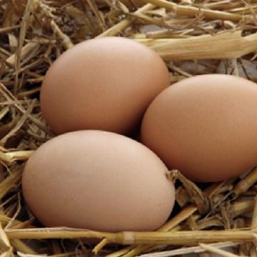Cobb realizó charla virtual sobre el proceso de manejo de huevos de granja