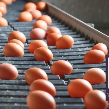 Addera desarrolló exitoso webinar nutricional avícola y presentó eficaz producto AlphaGal