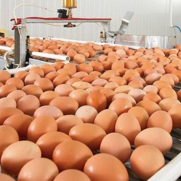 Mejora de la producción y calidad de huevos  con la suplementación de la pared celular de levadura