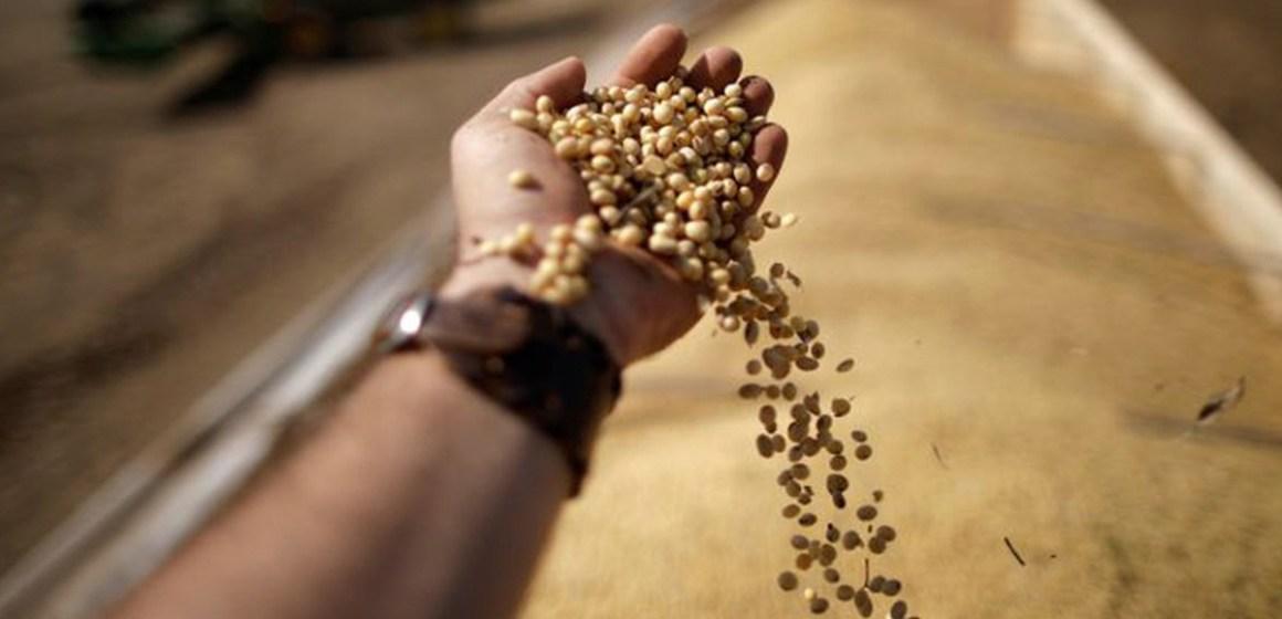 Brasil suspende aranceles sobre importaciones de maíz y soja hasta 2021