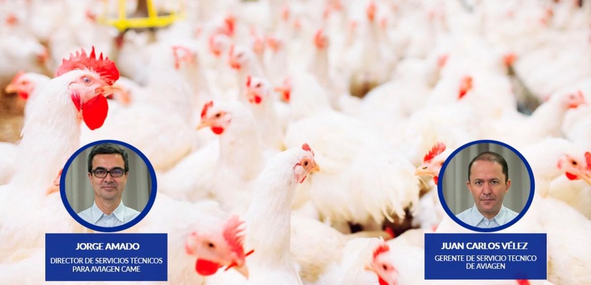 Nueva Serie de Webinars de Aviagen América Latina Promueve Exitoso Manejo Avícola