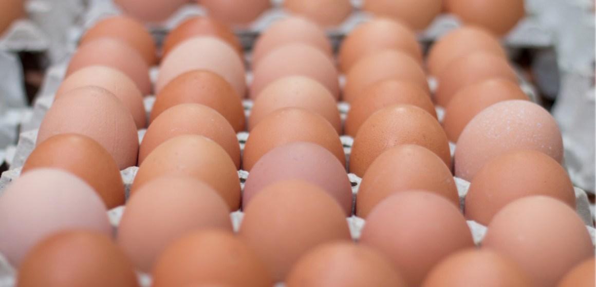Brasil exportaría 53 mil millones de huevos en 2021