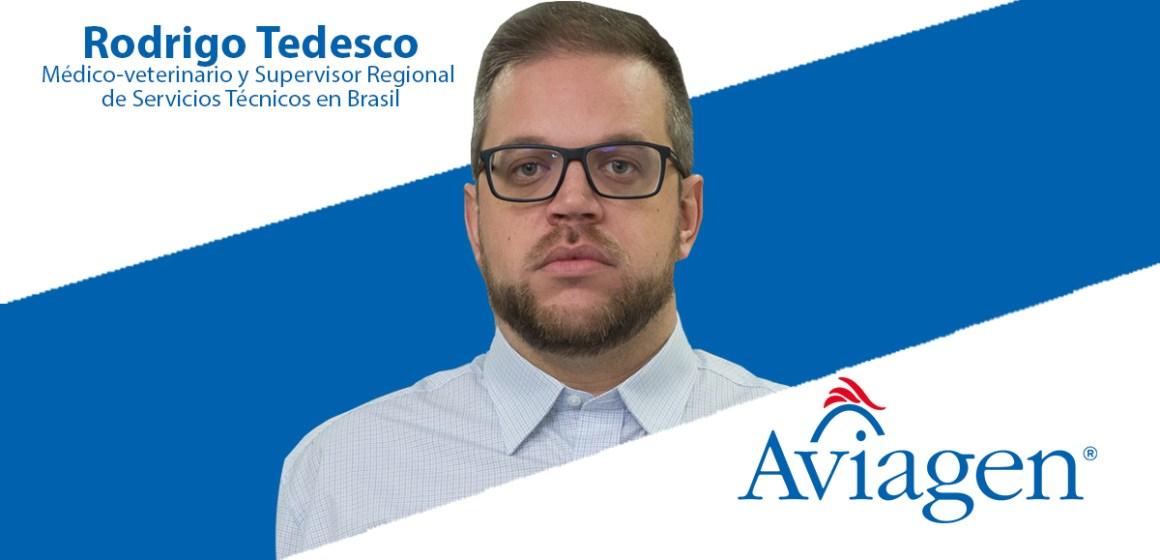 Aviagen debate los desafíos del manejo inicial en pollos de engorde durante el Simpósio Brasil Sul de Avicultura