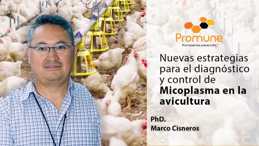 Promune presentó innovadoras estrategias para el diagnóstico y control de Micoplasma en la avicultura