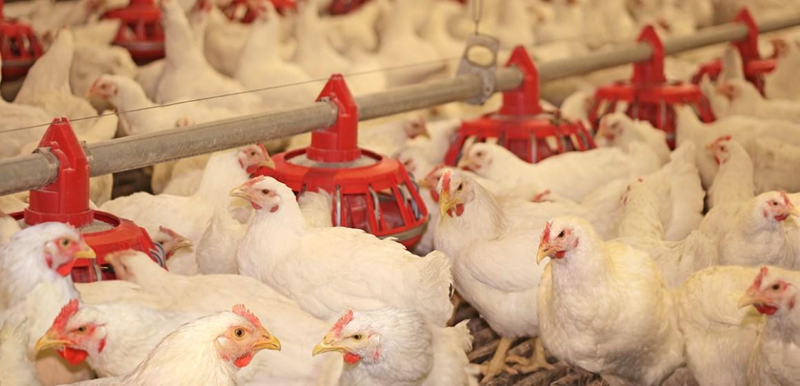 Dosis-respuesta de Lenerzyme, lipasa para nutrición animal, sobre dietas de pollo con EM reducida y extracto etéreo constante