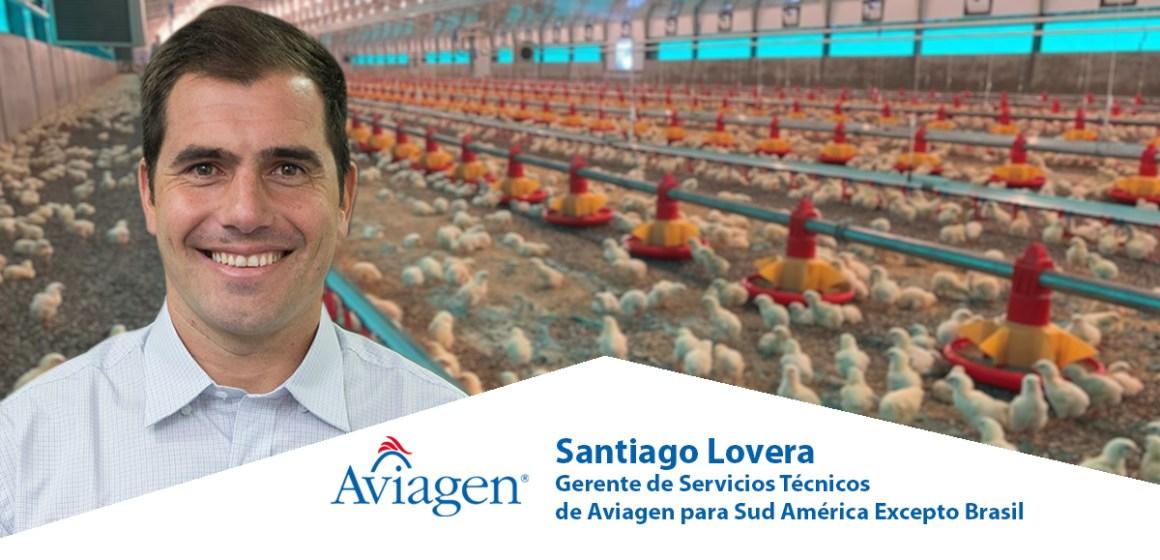 Próximo Webinar de Aviagen América Latina subraya la importancia de dar un buen comienzo a los pollos de engorde