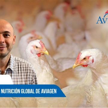 """Aviagen: Debate sobre """"Nutrición y su impacto en la salud, bienestar y rendimiento de las aves"""""""