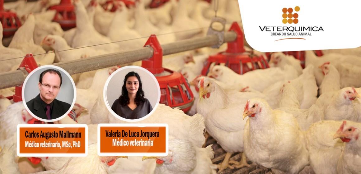 Veterquimica realizó webinar sobre el control de micotoxinas en el alimento de aves y cerdos