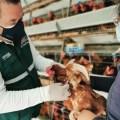 La Libertad: resguardan producción avícola mediante vigilancia activa permanente