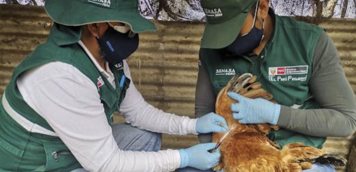 Descartan influenza aviar en tres provincias de Arequipa