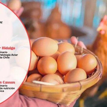 Veterquimica desarrolló OVOLATAM, serie de webinars sobre la calidad del huevo