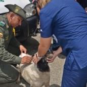 Rescate animal en Hidroituango.