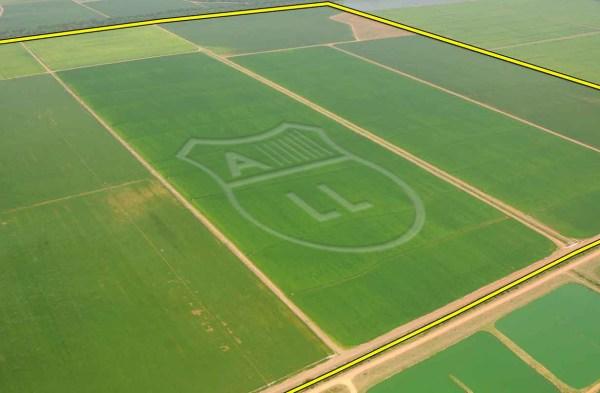 Misteriosas marcas aparecieron sobre un cultivo de arroz en El Espinal, Tolima. (Foto cortesía FAC)
