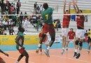 Volley-ball : les lions du volley-ball en Italie