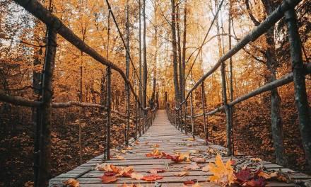 Vues d'automne au Nikola-Lenivets Art Park en Russie