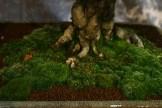 selection régionale EST 2012 - bonsai orme de chine 2