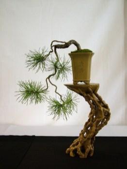selection rhone alpes bonsai 2012 124