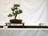 selection rhone alpes bonsai 2012 33