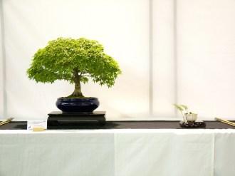 selection rhone alpes bonsai 2012 43