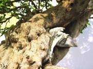 selection rhone alpes bonsai 2012 58