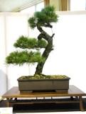 selection rhone alpes bonsai 2012 61