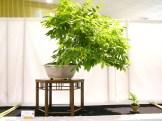 selection rhone alpes bonsai 2012 76