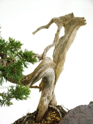 selection rhone alpes bonsai 2012 87