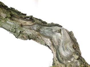 selection rhone alpes bonsai 2012 89