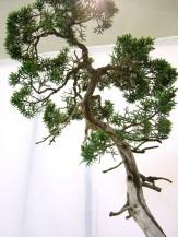 selection rhone alpes bonsai 2012 91